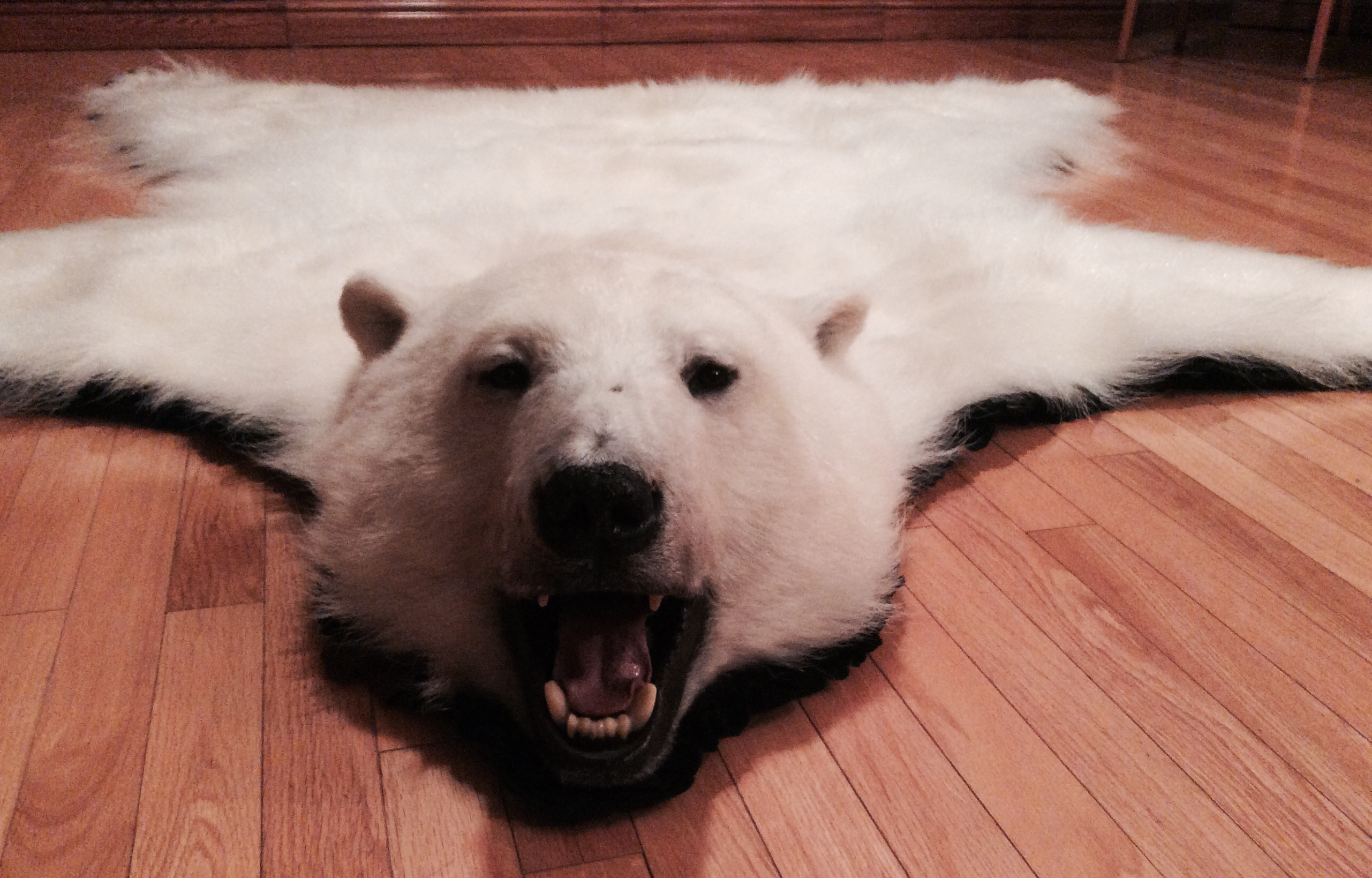 bear for black taxidermy the full mount size mouth store sale open rug