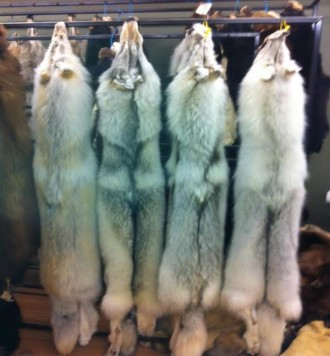 Skins for Taxidermy, wolf skin